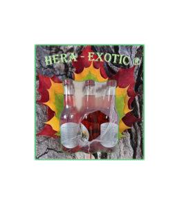 HERA–EXOTIC trink,s